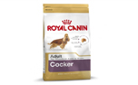 Royal Canin Cocker Adult Trockenfutter