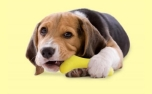 United Pets Hundespielzeug Gustosso soft, yellow