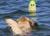 Doog Seal Wasserspielzeug Flipper und Blubber, pink & grün