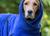 DRYUP cape Hundebademantel, edition blueberry
