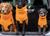 DRYUP cape Hundebademantel, edition clementine