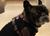 Hundepullover IQO Classic P1, schwarz
