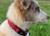 Hurtta Casual Hundehalsband, preiselbeere