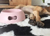 United Pets Hundenapf Pappy, rosa2020