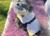 iqo Hundebademantel Pitschnass, hellgelb/dunkelgelb
