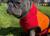 iqo Hundebademantel Pitschnass, orange/rot