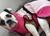 iqo Hundebademantel Pitschnass, rosa/pink