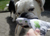 iqo Hundedummy (recycelt) Knochen mit Baumwollkordel