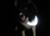 iqo Reflektor Hundehalstuch, neongelb