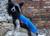 Jumppa Pomppa Sky Hundepullover, blau