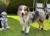Ruffwear Summit Trex Hundeschuhe, twilight gray