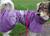 Hurtta Regenjacke Drizzle Coat, violett