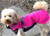 JumppaPomppa Pink Hundepullover, rosa