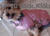 Hundemantel -Horse Blanket-, pink