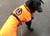 IQO VX Hundemantel neonorange