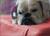 iqo Kunstleder Hundematratze, bordeaux