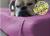 iqo Kunstleder Hundematratze, violett