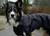 iqo VX Extrem Hundemantel, schwarz