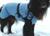 IQO VXf Hundemantel Softshell hellblau