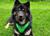 Ruffwear Hundegeschirr Front Range, meadow green