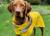 rukka Stream raincoat Regenjacke, gelb